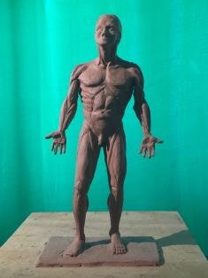 Anatomy Study 1